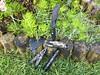 EDC (mintaure) Tags: leatherman signal wave black bit kit spyderco tenacious tools