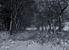 Winter mono (xDigital-Dreamsx) Tags: bnw blackandwhite monochrome mood paysage landscape snow snowfall trees tree fence gate woodland countryside rural bw