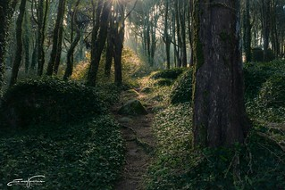 Early morning inside the woods