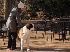 Dog Days '18, Morton Arboretum. 3 (EOS) (Mega-Magpie) Tags: canon eos 60d outdoors the morton arboretum lisle dupage il illinois usa america lady woman people person dog pet cute
