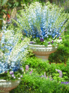 Fountains of Flowers