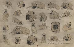 Azor (Hokusai Manga Style) (Grandiloquences) Tags: dogs dogsinart pugs pugsinart pets azor dogcollars collars dogportraits printsandprintmakers prints henricharlesguérard guérard frenchartists frenchart frenchprints 19thcentury 19thcenturyfrenchart 19thcenturyfrenchartists 19thcenturyfrenchprintmakers worksonpaper graphicarts 1880s frenchengravers etchings frenchetchings hokusai manga japonisme