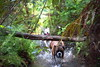Limbo Lower (Bl.Mtns.Grandma) Tags: boxer dog log water ddogchal