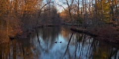 Duck Dreams (chantsign) Tags: ducks reflection waterreflection serene muted river morning sunrise riverbank