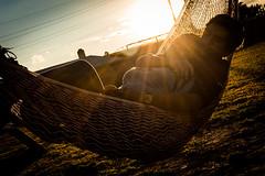 """Al atardecer"" (Alyaz7) Tags: nikond7200 lentenikonnikkorafs1855mm13556giidxvr rawquality tripievanguardaltapro263ap flashtriggersyongnuorf603nii autorretrato selfportrait amor love abrazo hug hamaca atardecer sunset tranquilidad pareja couple contraluz backlight juntos together"