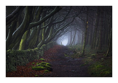 Us & Them (K.R.Photography) Tags: peakdistrict derbyshire woodland trees fog mist sony a7ii