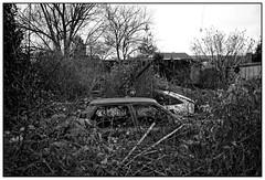 nature is taking over (Alexandre Dulaunoy) Tags: natureistakingover noiretblanc noirblanc blackwhite bw nb monochrome nature old abandoned abandonedplace cars