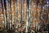 J-4 APUSENI-0729 (Philippe Murtas Watch my albums) Tags: couleur automne roumanie feuille nature nikon exterieur bois ciel color autumn romania leaf outdoor wood sky flickrtravelaward ngc personne
