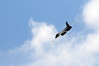 Fairford 61858 (kgvuk) Tags: raffairford aircraft bomber b1b lancer bone