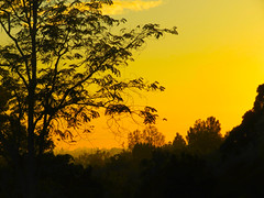 Lasting only moments, still magically enchanting. (vickilw) Tags: thehuntington sunset 7daysofshooting week29 serene colourfulthursday 6ws andfinally 1182018 118118