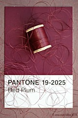 PANTONE 19-2025 Red Plum (Anne-Miek Bibbe) Tags: pantone kleuren colors farben colori colores cores canoneos700d canoneosrebelt5idslr annemiekbibbe bibbe nederland 2018 rood roug red rot rosso rojo vermelho pantone192025 redplum