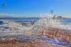 Gull Play (Michael F. Nyiri) Tags: bird birds seagulls sea beach ocean cabrillobeach sanpedro california southerncalifornia