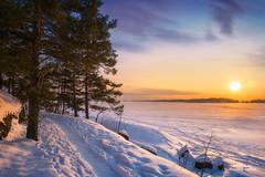 Winter sunset (Joni Salama) Tags: lumi luonto exposureblending auringonlasku keilaniemi talvi kasvit valo puu nikcollection espoo suomi mänty esbo uusimaa finland fi snow nature winter light tree pine