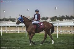 IMG_7130 copy (Services 33159455) Tags: qatar doha horse racing qrec emir horseracing raytohgraphy