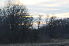 IMG_0579 (Scarlet Moments) Tags: wildlife refuge delaware bombayhook kentcounty nature canonrebelt6