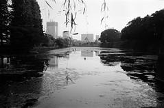 Imperial Palace (varjagg) Tags: tokyo japan november 2016 leica m4 summicron 35mm f2 v4 preasph kodak trix 400 400tx xtol 11 moat swan trees horizon
