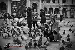 Milano - Piazza Duomo (bibendum84) Tags: milano duomo piccioni pigeons fame milan mangime