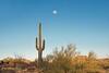 "Saguaro (joeinpenticton Thank you 1.9 Million + views) Tags: sanoran desert ""sanoran desert"" arizona phoenix saguaro cactus joeinpenticto joe jose garcia tree arms mesa dobbins lookout look out mountains ""dobbins lookout"" us usa america shrub shrubs plant plants moon maricopa county"