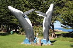 IMG_7558 (mudsharkalex) Tags: california pacificgrove pacificgroveca