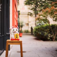 Have a great week! (ninasclicks) Tags: cat street bokeh dof manekineko miniblocks toy kitten