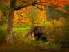 Stoddard Creek (kuddlyteddybear2004) Tags: asp alleganystatepark redhouse fall autumn stoddardcreek