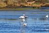 PA230563t_e (mrkevinw08) Tags: portugal algarve parquenaturaldariaformosa parque natural riaformosa