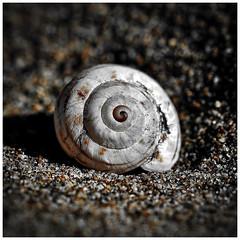 Shell (mariolka3) Tags: depthoffield dof macroworld nikon texture beauty details shell macro beach sand
