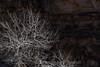 Bare Trees and Rock in Nine Mile Canyon (Lee Rentz) Tags: 9thcavalry buffalosoldiers carboncounty duchesnecounty fremont nationalregister nationalregisterofhistoricplaces ninemilecanyon nonemilecanyonscenicbackcountrybyway price ute wellington america ancient archaeological archaic art autumn bare blm branches bureauoflandmanagement canyon creation drawing historic historical history human images indian late noleaves northamerica old regiment rock rockart silhouette southwest southwestern stone theworldslongestartgallery tree trees trunks us usa utah winter worldslongestartgallery