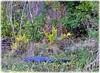 Sawgrass Lake Park - St Petersburg Florid (lagergrenjan) Tags: sawgrass lake park st petersburg florida alligator