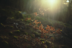 L (Lost frames) Tags: trees tree nature forest light backlit plants dof walk wald woods sunset canon 5d markii rays autumn grass 50mm