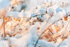 back to Winter (icemanphotos) Tags: winter sunlight cold icy abstract meadow frozen
