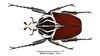 Goliathus goliatus Linnaeus, 1771 (Easyparadise) Tags: insect entmology cetoniinae goliathus beetle collection museum nature macro specimen hobby animal africa scarab 昆虫 甲虫