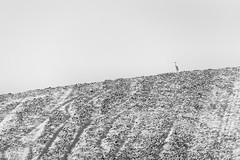 0699 The One (Hrvoje Simich - gaZZda) Tags: outdoors noperson field nature minimalism animals bird monochrome blackwhite slavonia croatia europe nikon nikond750 sigma150500563 gazzda hrvojesimich