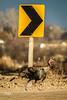 Etiquette (JGemplerPhotography) Tags: wildturkeys turkey birds