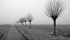 Way to nowhere (Kai Beinert) Tags: allee blackandwhite schwarzweis schwarzweiss natur nature nikon outdoor landscape landschaft bäume tree winter nebel fog road way spooky monochrome himmel baum feld gras field