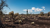 El Pinacate - Sonora - [Mexique] (2OZR) Tags: mexique sonora parcnaturel desert volcan flore geologie