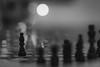 Die Schachnovelle von Stefan Zweig (_andrea-) Tags: macromondays macro mondays favourite novel stefan zweig schachnovelle literatur blackandwhitephotography sonya7m2 planart1450 carlzeiss objektiv mount chess schachfiguren chessmen myfavouritenovel