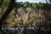 etang (jpasserieux) Tags: etang lagune