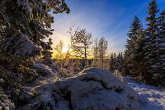 Winter Dimmed Sunlight (Khanghoang2003) Tags: 2017 canonef1635f4lisusm canoneos6d färgelanda kullberg landskap natur skog snö sol solljus träd vinter lillesäter västragötalandslän sverige se