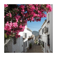 Street of Zahara de la Sierra (moniquevantorenburg) Tags: zaharadelasierra cadiz andalusia spain city historic flowers colorfull street small m43 olympusomdem5markii olympus124028pro mirrorless whitevillage square bougainvillea pink