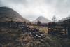 Gate to Glencoe - HFF - 26/365 (der_peste (on/off)) Tags: glencoe fence stonewall ruins ruin scotland highlands united kingdom moody mist fog gate oldhouse clouds sky mood