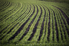 Green lines (Valentina Conte) Tags: green lines grass field meadow lawn countryside land nature landscape agricolture work valentinaconte rebelsl1 canon100d groove furrow plowed plowing seed sow sowing spreading leadinglines pattern texture openspace