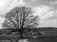 Unbenannt (weber.bert) Tags: jahreszeit eifel frühling wanderungen analogefotografie blackwhite inbiancoenero noiretblanc grauwertabstufungen sw primavera ressort spring