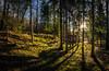 Lechauen 8 explored (Bilderschreiber) Tags: lechauen auenland landsberg hut hütte sun sonne gegenlich backlight bavaria bayern wintersonne schatten shadows germany deutschland grouptripod