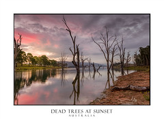 Beautiful dead trees stand steadfast in the lake at sunset (sugarbellaleah) Tags: trees beauty lake sunset gumtrees clouds tanquil nature remote rural environment water reflections countryside mountains dead treetrunks sundown australia downunder weather outback scenic
