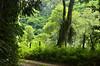 Atravessando a mata (Márcia Valle) Tags: nature natureza minasgerais brasil brazil brazilianlandscape paisagem juizdefora márciavalle nikon d5100 verde green interior estrada road caminho mataatlântica