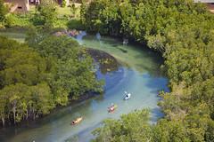 Constance Ephelia mangroves