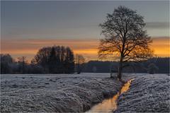 Kleine Roth (Robbi Metz) Tags: deutschland germany bayern bavaria reischenau augsburgwestlichewälder kleineroth landscape trees forest creek water sunrise sky frost colors canoneos