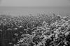 Côté Etang de Thau (Michel Seguret Thanks for 11,6 M views !!!) Tags: france languedoc herault sete hiver winter inverno invierno mer mar mare sea see neige schnee snow nieve etang pond michelseguret nikon d800