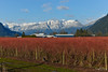 Rannie Rd., Pitt Meadows, BC (SonjaPetersonPh♡tography ♡ Away Mar. 21-25) Tags: pittmeadows pittpoulder bc britishcolumbia canada nikon nikond5300 landscape mountains sky snowcappedmountains mountainlandscape roads country blueberries blueberrybushes bushes colour